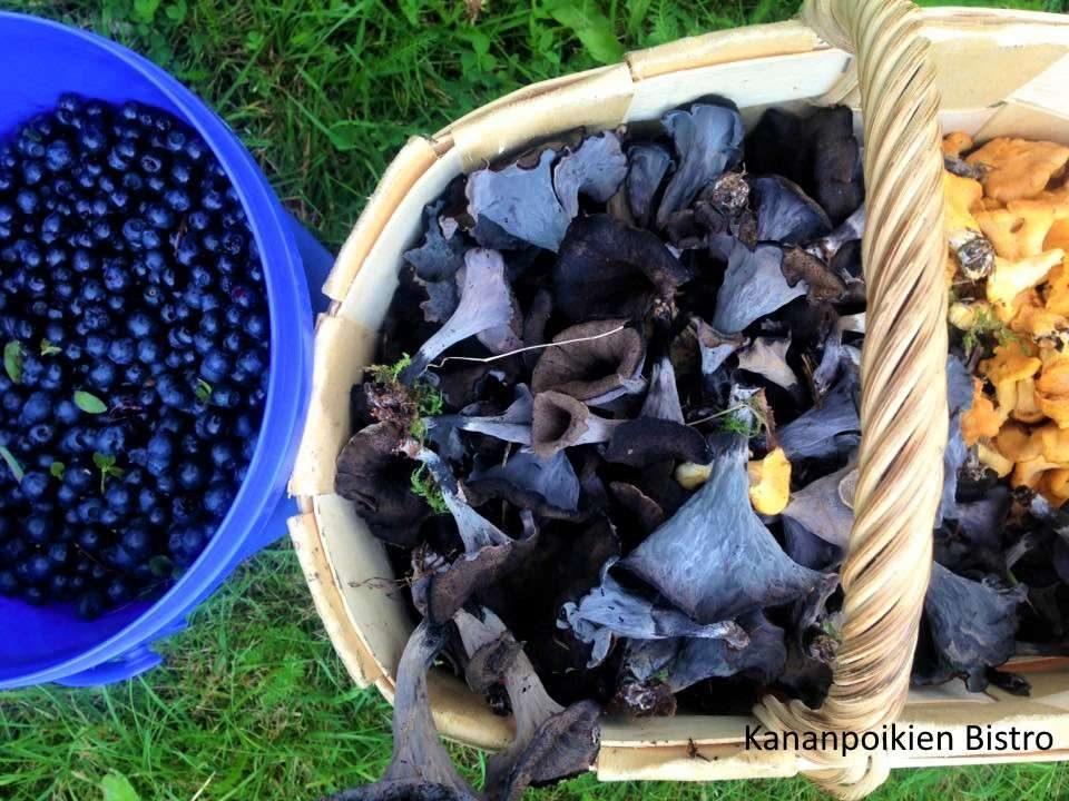 Paljon mustatorvisieniä ja vähän kantarelleja sekä mustikkaa